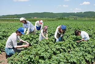 На работе на ферме