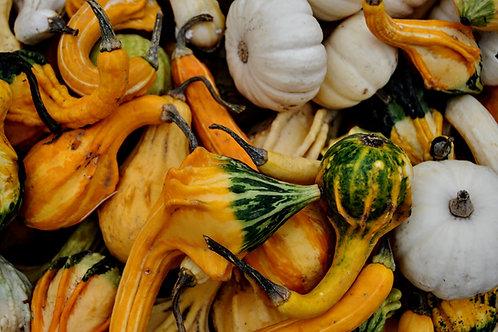 Plant Parts and Pumpkins