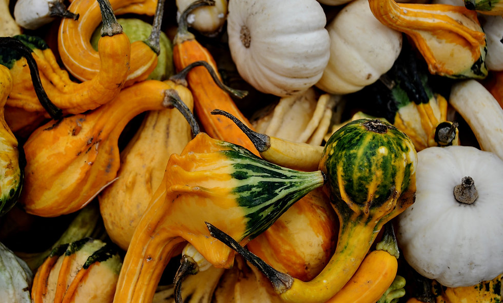 Plant Parts and Pumpkins