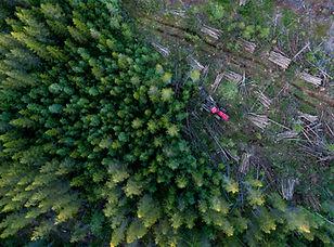 Аэрофотоснимок обезлесения