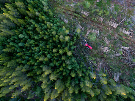 8 Ways on How You Can Fight Deforestation