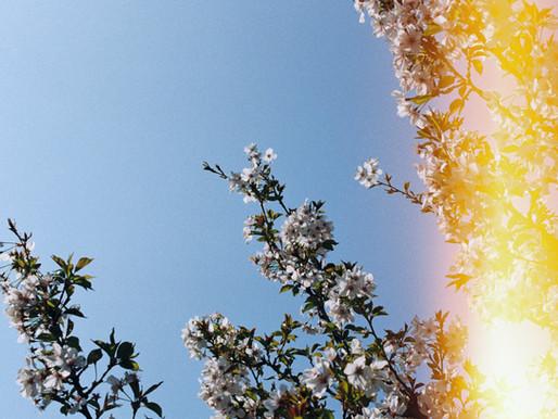 Baharın Mutlu Habercisi; Hıdırellez