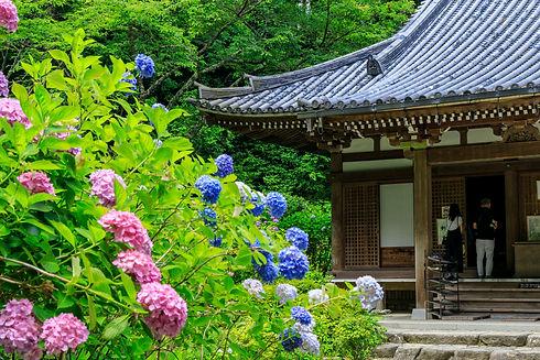 岩船寺の紫陽花と広島市民葬儀
