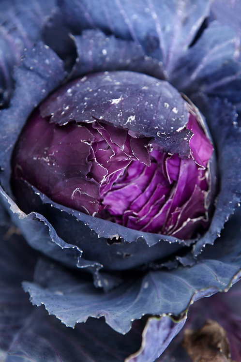 Red Acre Cabbage 4 Pack