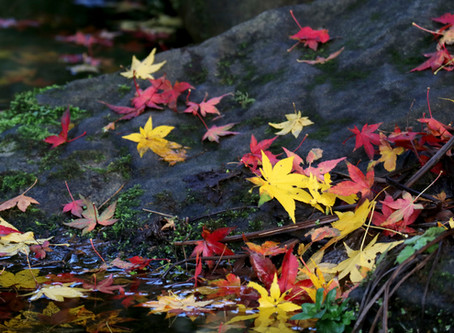 Wellness Resources & The Change of Seasons...