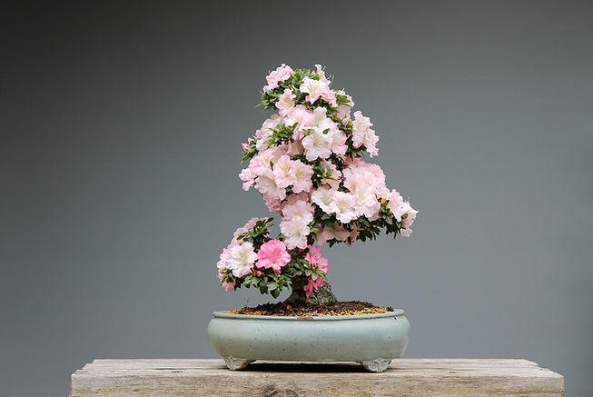 Fiori di piante bonsai