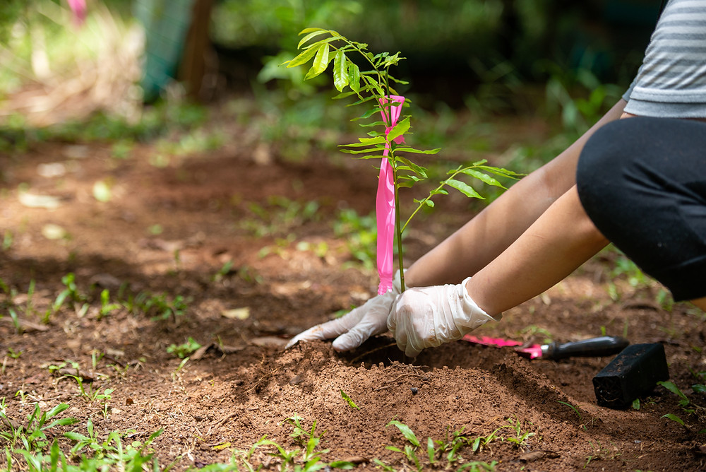 CSR project - planting a tree for corporate social responsibility