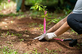 Planting a tree in topsoil