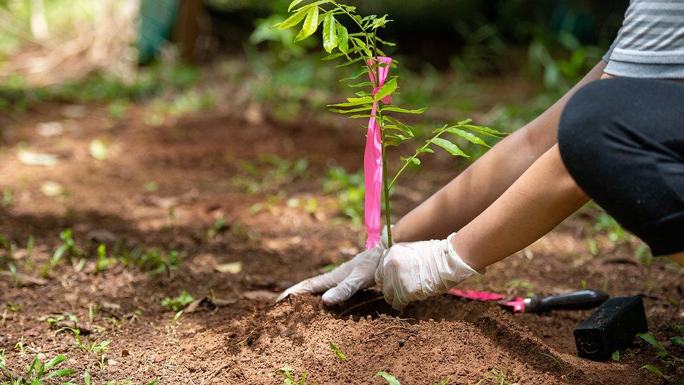 Planten van bomen in de omgeving