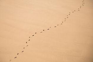 Voetsporen op zand