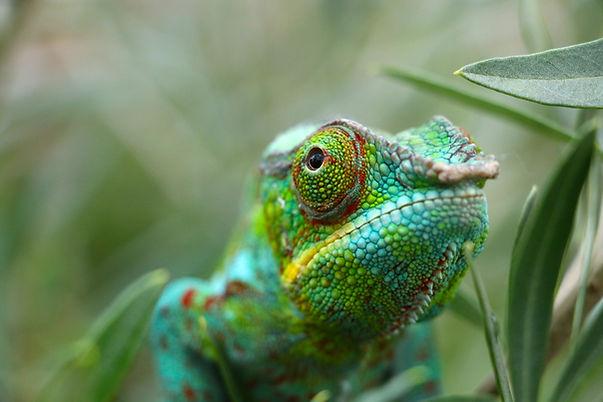 reptile vet carlsbad dr. b