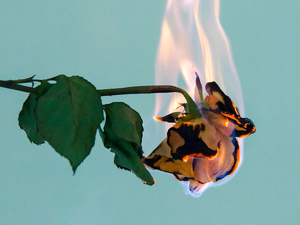 Rose brûlante
