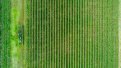 Foto aérea do campo de colheita