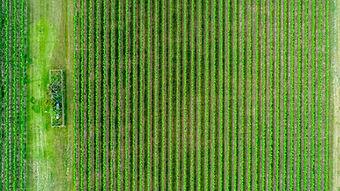 穀物畑の空撮風景