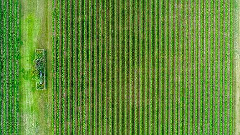 Crop Field Aerial Shot