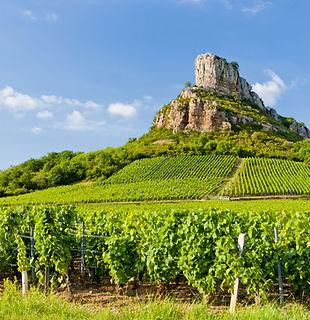 Formation vin du Roussillon