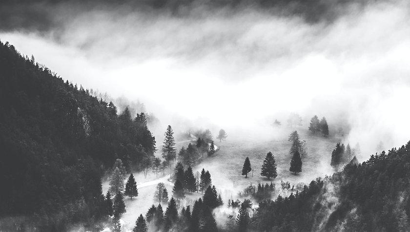 Foggy foresta