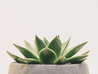 2021/07/20「オススメの観葉植物」 加圧トレーニングなら加圧スタジオHIWALANI eluaです! 小田急線・町田駅東口より徒歩3分です。