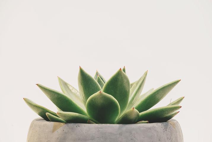 succulent representing simplified simplistic organization