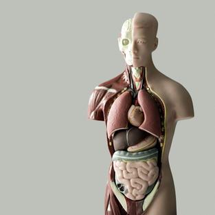De l'éducation amoureuse du corps et de l'esprit