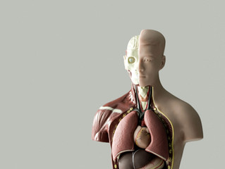 Acupuncture: The key to longevity is organ function!