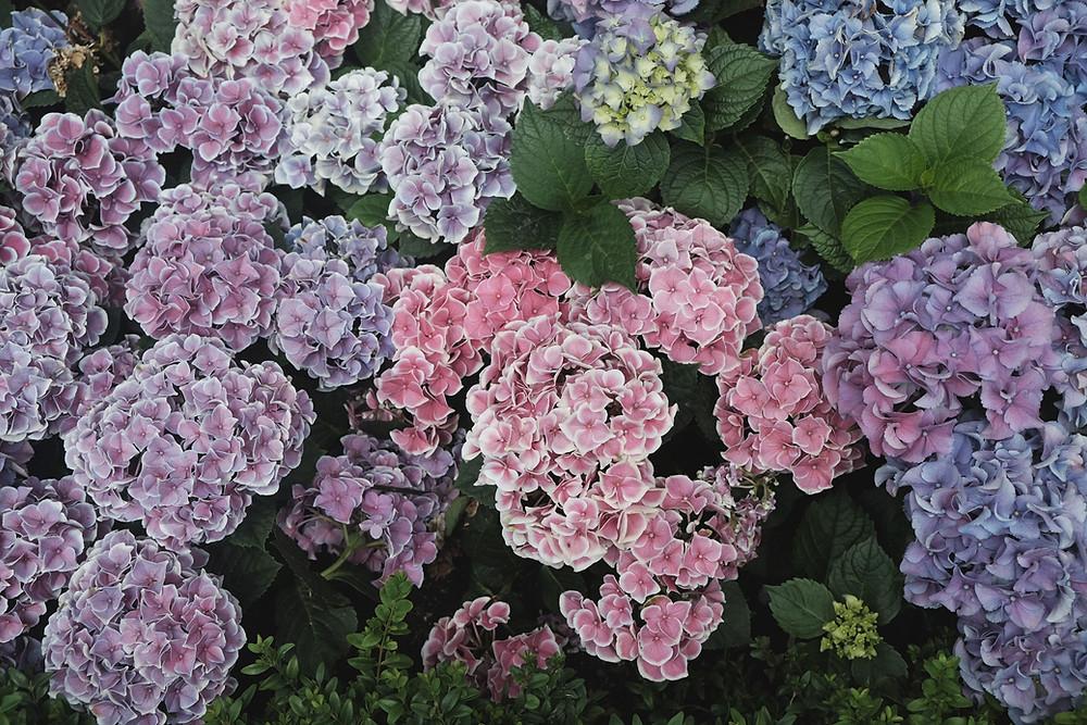 Flowers: Image showing purple flowers