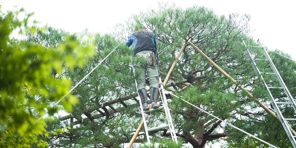 Influence of Municipal Pruning Practices on Urban Forest Health and Storm Resilience