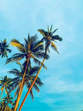 Palm Trees at tropical beach in caribbean resort Bahamas cruise