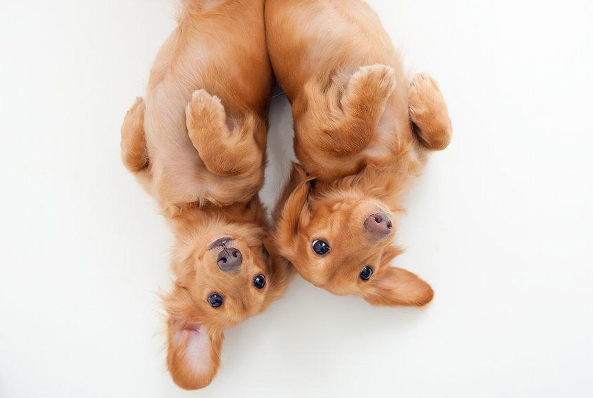 犬 ミニチュアダックス
