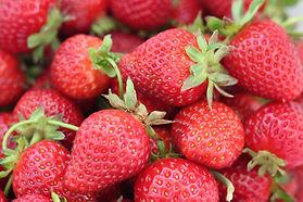 Fruit and Longevity Part 2