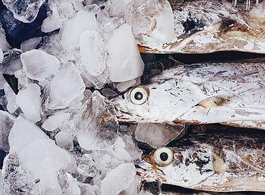 氷の上の魚