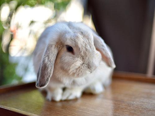 Rabbit Level 3 Proficiency Test