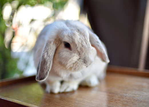 Söt kanin