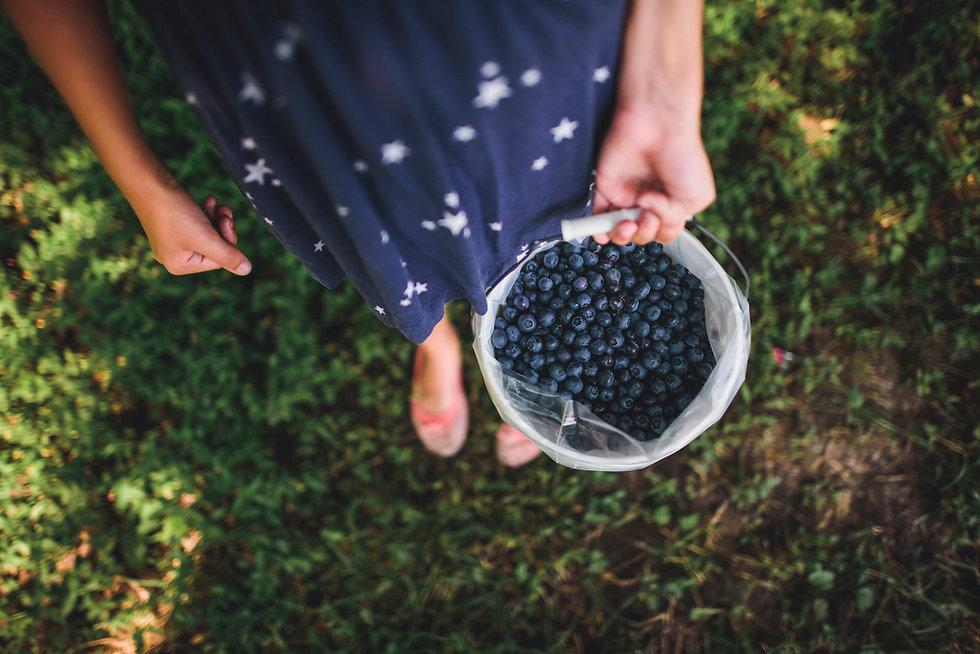 Ferske blåbær
