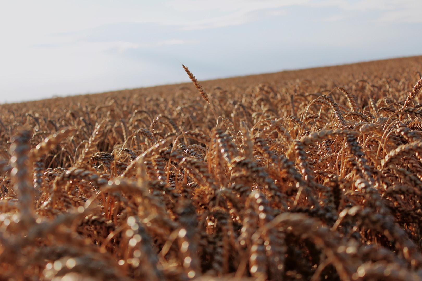 Dry Field
