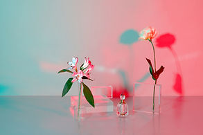 Flowers and Tranparency