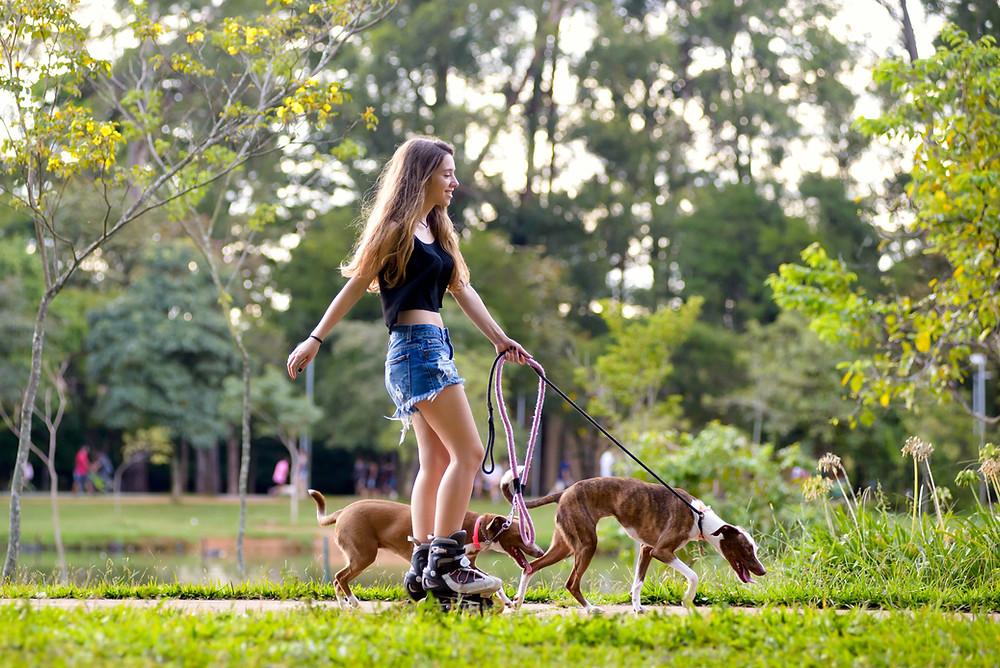 honde trekt aan de leiband op wandeling