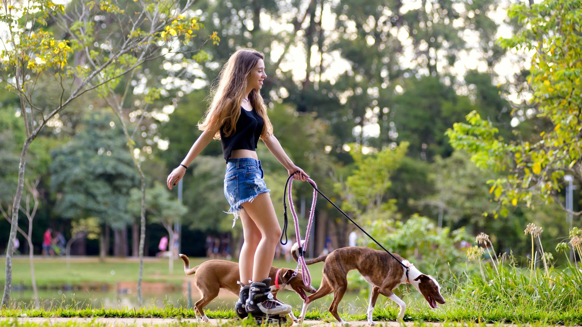 Rollerblader avec chiens