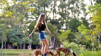 Rollerbladen mit Hunden