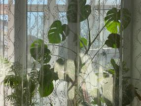 Why we rotate houseplants