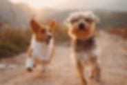 comportementaliste , educateur , canin, chien , tarif , education , comportement , problème , salon de toilettage , toutous , visioconférence , zellwiller , bas rhin , alsace , barr , obernai