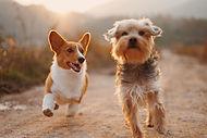 Cachorros amigos