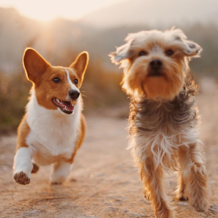 National Dog Day at HVO!