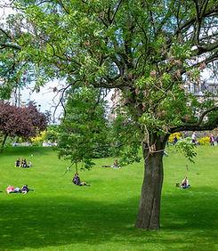 公共の公園