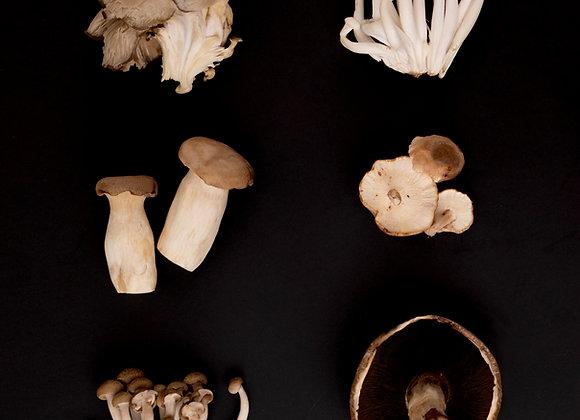 Mushroom & Lentil Ragu