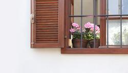 Géranium sur le rebord de la fenêtre