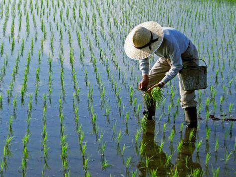【議事録】耕作放棄地域での就農継続支援について 21年3月11日