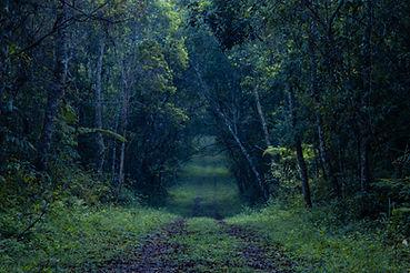 Chemin de la forêt tropicale sombre