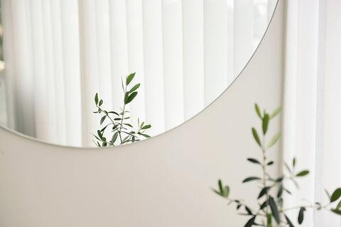 植物鏡の反射