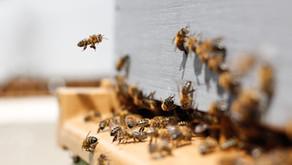 Brněnský hotel International a včely